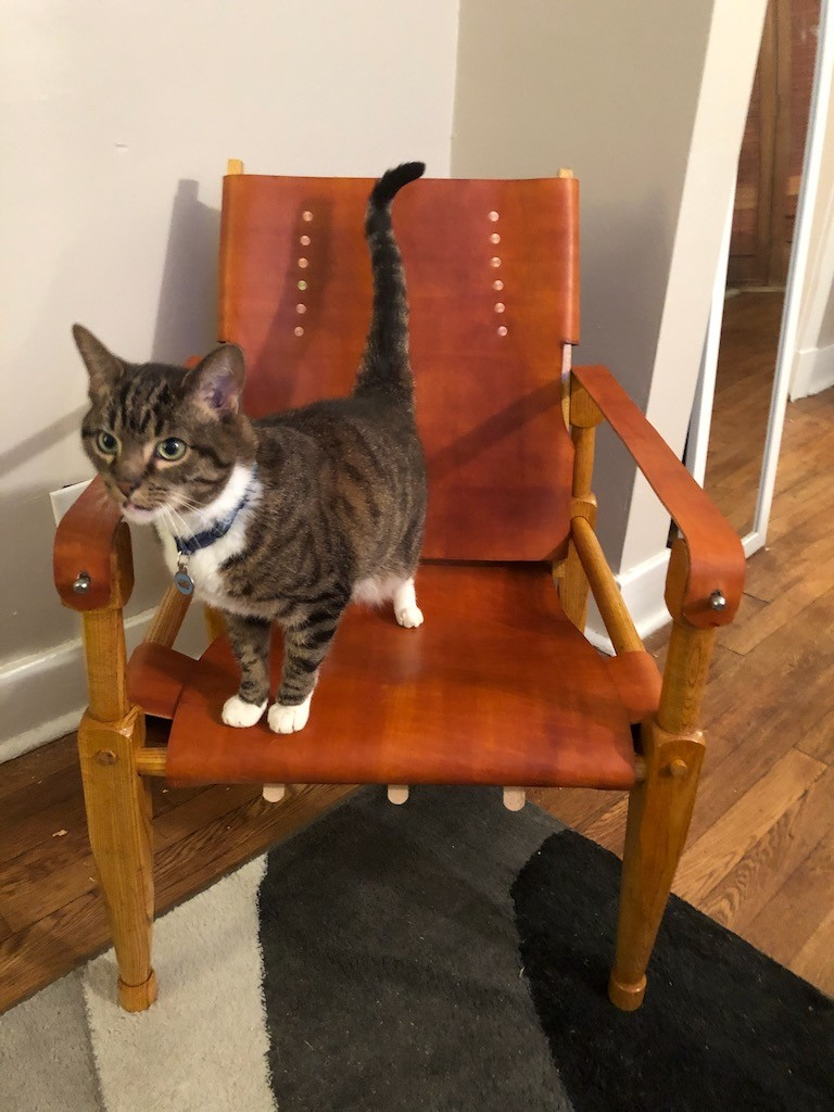 Cat standing on a Roorkee Chair